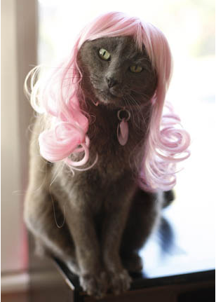 Pink Passion Kitty Wig